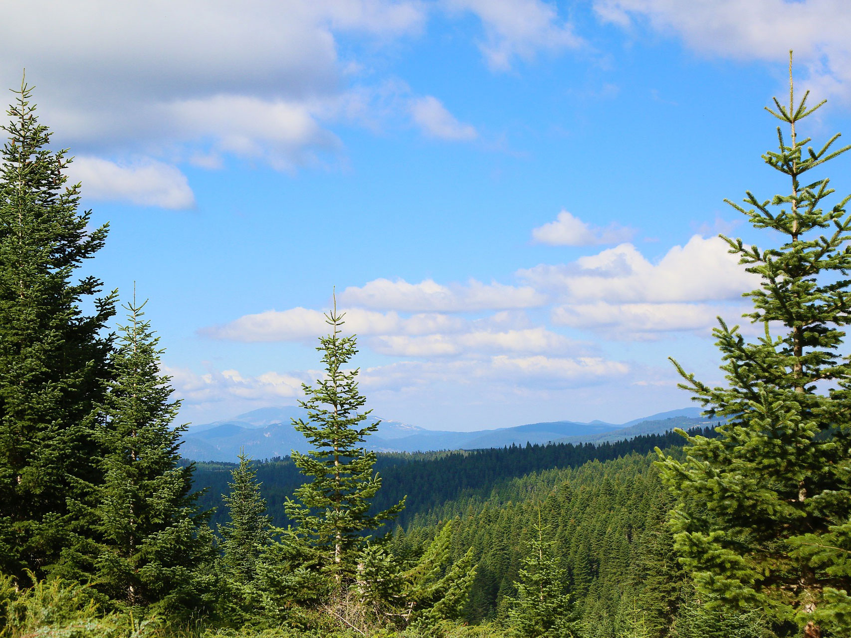 ペレットストーブで富山の森林を守れ